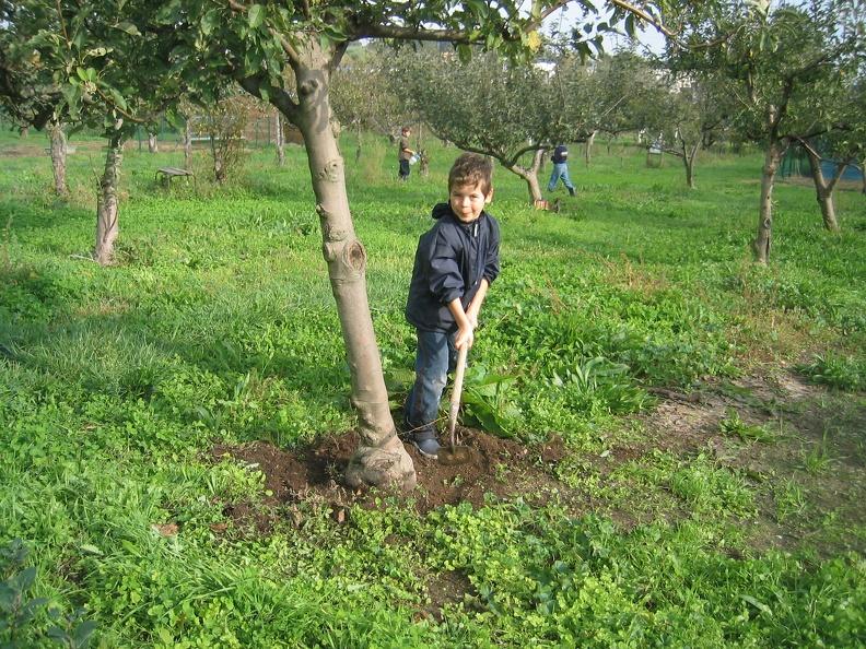 Agroecologie desherbage du pied arbre phototh que de l - Quoi planter en novembre ...
