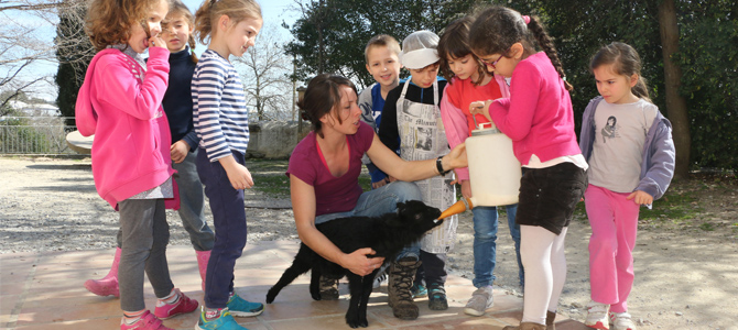 Un groupe d'enfants accomagnés d'un animateur donnent le biberon de lait à un agneau