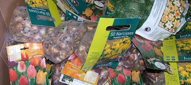 Sachets de bulbes de Botanic retirés de la vente et récupérés par l'Écolothèque