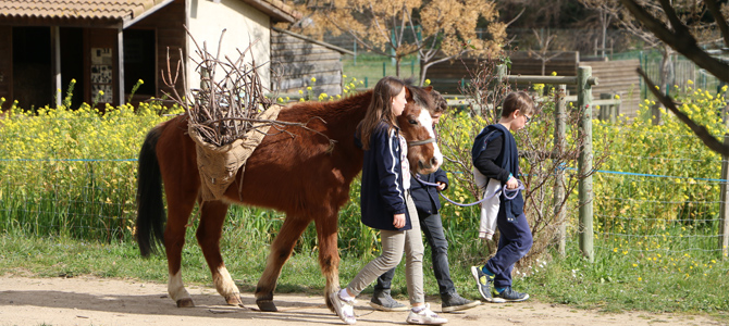 Trois enfants transportent des branches avec un cheval