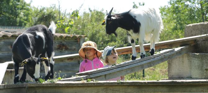 Deux enfants observent deux chèvres manger de l'herbe sur le parcours d'équilibre de leur enclos