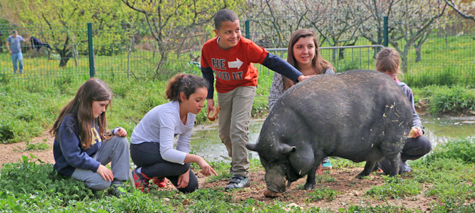 Des enfants accompagné d'un animateur observent et caressent un cochon noir