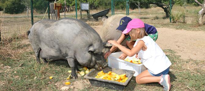 Deux enfants donnent des morceaux de courgettes aux cochons de l'Écolothèque