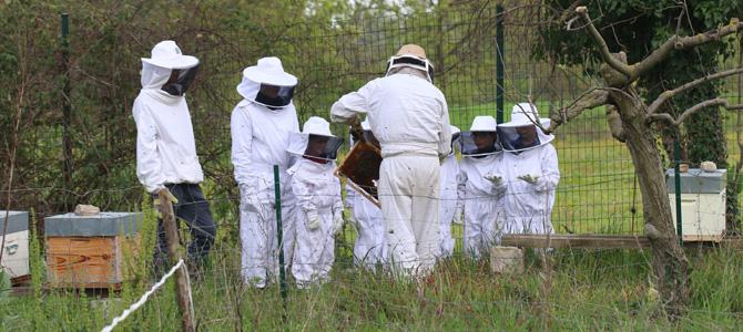 Découverte des ruches de l'Écolothèque avec un groupe d'enfants