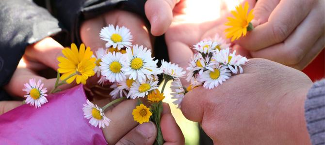 Des fleurs dans des mains :  récolte de fleurs pour réaliser des créations avec des objets naturels