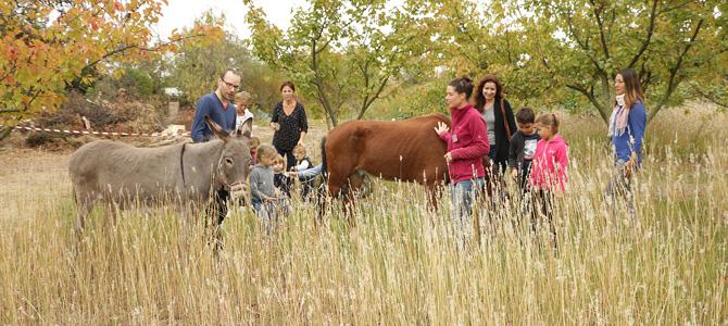 es enfants et leurs parents accompagnés d'un animateur baladent les chevaux dans le verger de l'Écolothèque