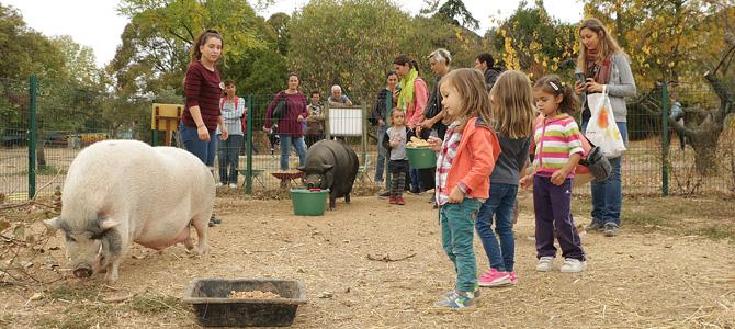 es enfants et leurs parents accompagnés d'un animateur nourrissent les cochons de l'Écolothèque