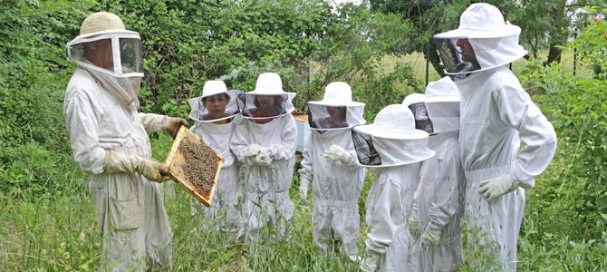 Un groupe d'enfants accomagnés d'animateurs observent des abeilles sur le rayon d'une ruches de l'Écolothèque