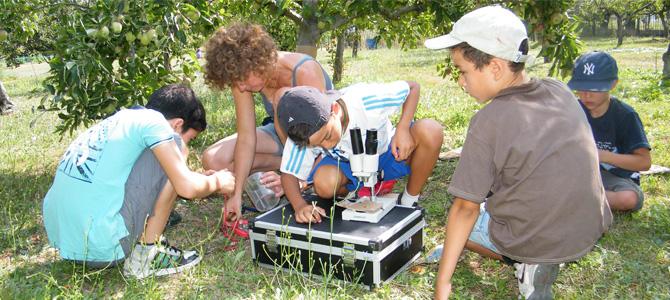 Observation à la binoculaire de larves de carpocapses ( ravageur de fruits à pépins) trouvées dans des pommes avec les enfants