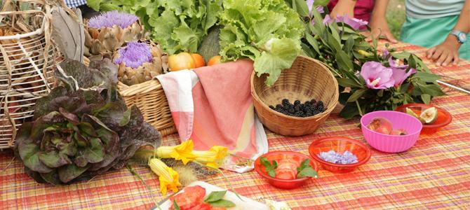 Salades, fleurs de courgette, tomates, feuilles de basilic, fleurs comestibles, feuilles de laurier-sauce, pèches et figue coupée sur une nape, oignons dans un panier en fer blanc, mures, artichauts, tomates, courgettes et salade dans des paniers