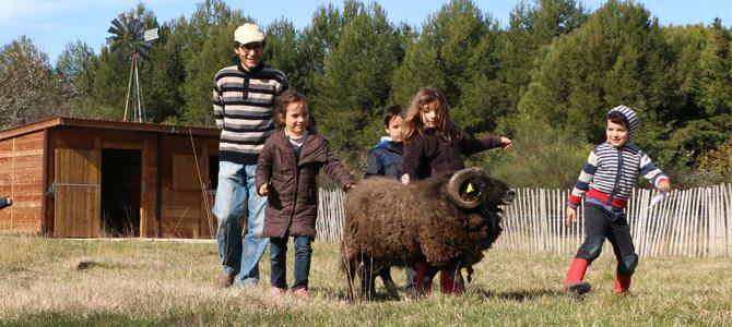 Les enfants rencontrent avec les moutons d'Ouessant de l'Écolothèque