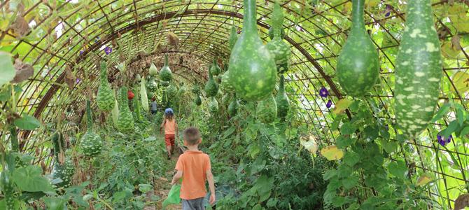 Des enfants marchent dans le tunnel de courges pour observer des cucurbitacées suspendues