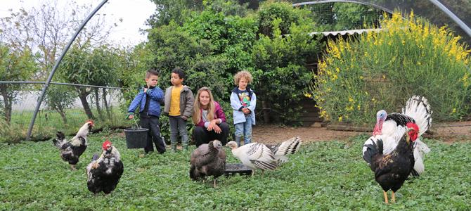 Trois enfants accompagnés d'un animateur observent des volailles se nourrir dans la volière de l'Écolothèque