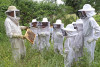 L'apiculteur montre un rayon avec des abeilles à un groupe