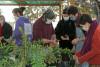 3 personnes regardent la coupe d'une plante qu'un agent de la ville est en train de faire