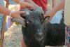 Des mains d'enfants caressent un bélier