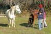 2 enfants et un animateur approchent en douceur deux chevaux dans un pré