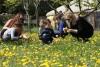 Des enfants et leurs parents accompagnés d'un animateur récoltent des fleurs dans le verger de l'Écolothèque