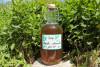 Une bouteille de sirop est posée devant des plantations de menthe