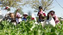 Un groupe d'enfant observe des canards de très près