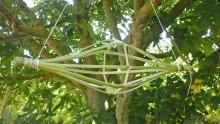 Un yoyo en canne de Provence accroché dans un figuier