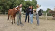 un animateur explique aux stagiaires comment mettre un licol à un cheval