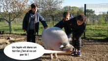 Un cochon discute avec trois enfants
