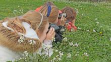 3 enfants observent avec des jumelles des oiseaux