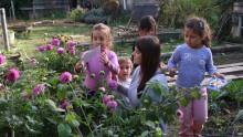 Des enfants acoompagnés d'un animateur collectent des pétales de fleurs pour réaliser des palettes de couleurs