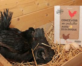 Deux poules couvent dans une cagette en bois remplie de paille avec le livre à côté ainsi que des oeufs