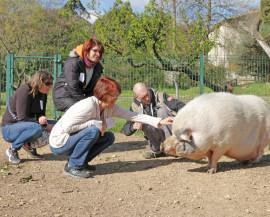 4 personnes s'approchent d'un cochon avec beaucoup de douceur