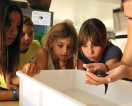 Un groupe d'enfant observent un axalotl tenu dans les mains d'une animatrice