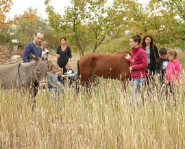 un groupe de parents, d'animateurs et d'enfants promène un âne et un cheval