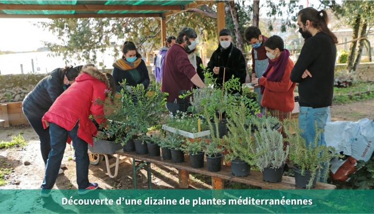 Découverte des plantes méditerranéennes