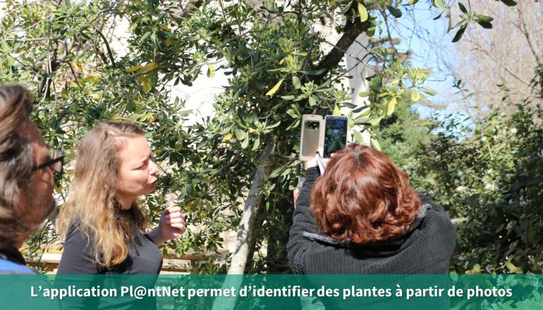 des photos pour identifier les plantes