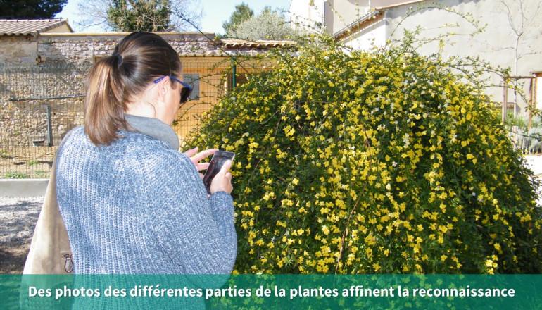 prendre des photos des différentes parties de la plante affine la recherche