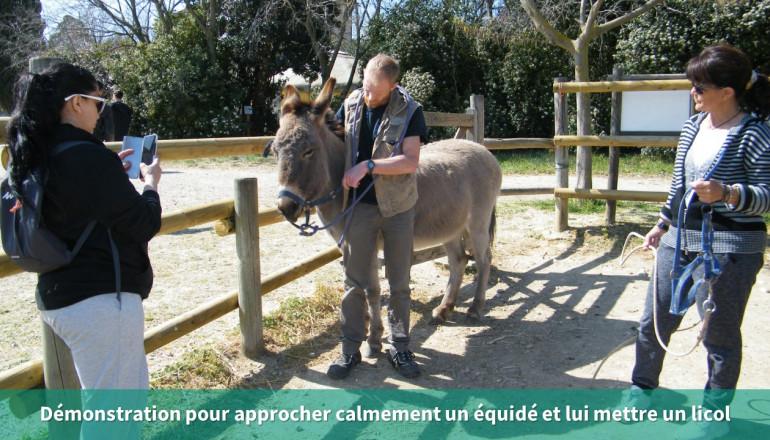 un agent montre à deux participantes comment mettre un licol à un âne
