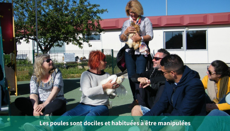Manipulation des poules par les participants