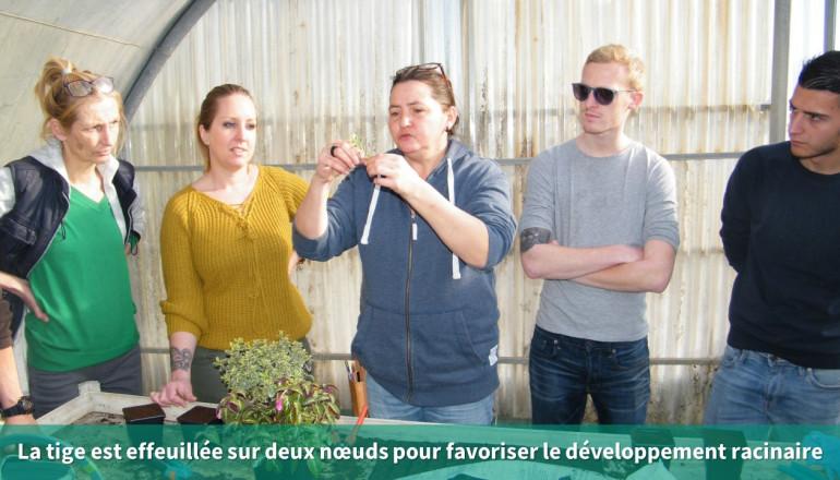 un agent de la ville de Montpellier montre aux participants comment effeuiller les plantes