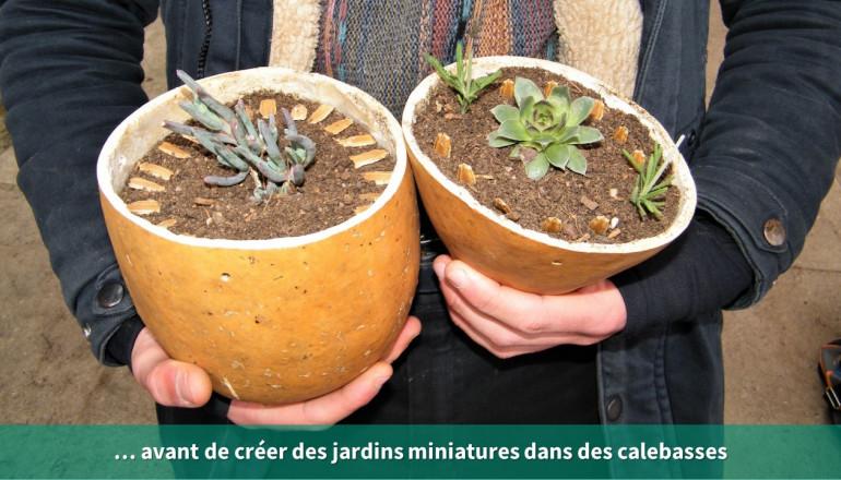 gros plan sur 2 coloquintes avec des boutures de plantes grasses