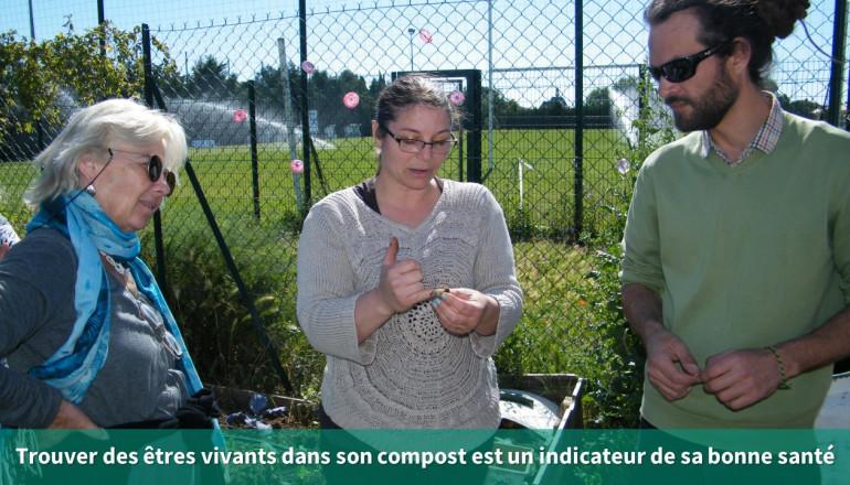 3 personnes observent les petites bêtes du compost