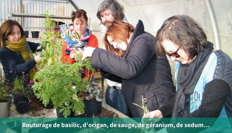 les agents bouturent du basilic, de l'origan, de la sauge, du géranium et du sedum