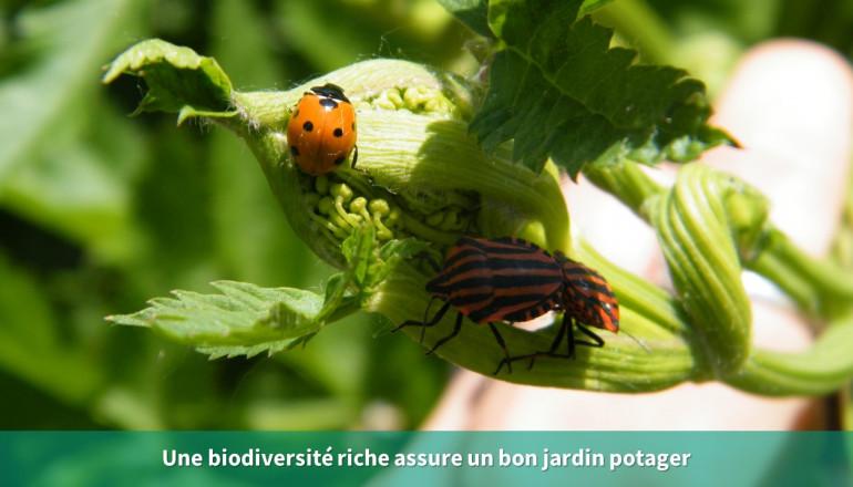Un couple de punaise et une coccinelle sur une plante