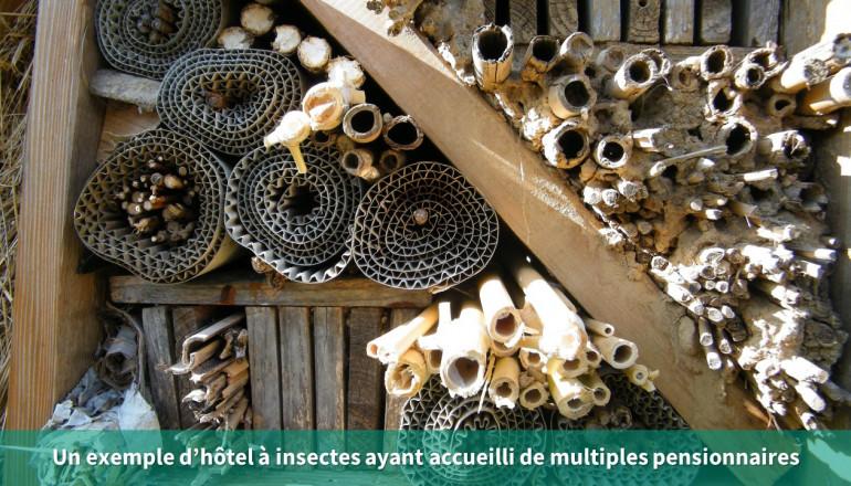 vue d'un hotel à insectes