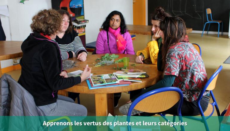 Apprenons les vertus des plantes et leurs catégories