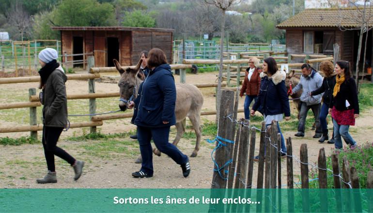 Sortons les ânes de leur enclos...