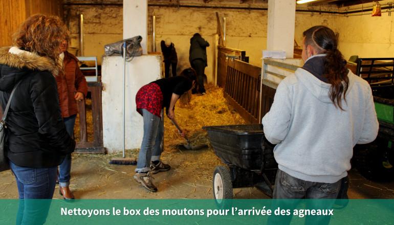 Nettoyons le box des moutons pour l'arrivée des agneaux