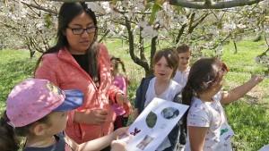 Une intervenante espagnole anime un jeu avec une classe autour des arbres fruitiers