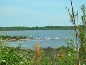 Vue sur l'étang du Méjean avec les flamants roses