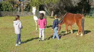 3 enfants de dos tentent de s'approcher de deux chevaux dans un pré